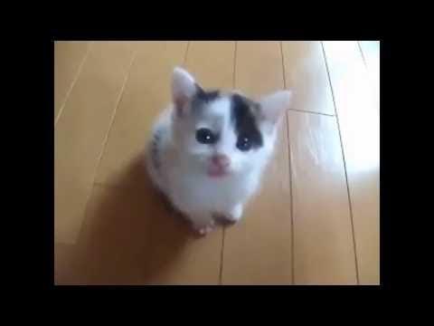 笑える   おもしろ   かわいいいたずら猫と子猫見なければならない|かわいい猫と子猫