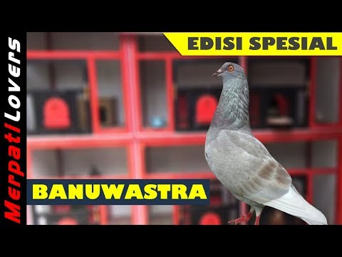 Panah Suci BANUWASTRA Special Edition | SSB Team Tegal