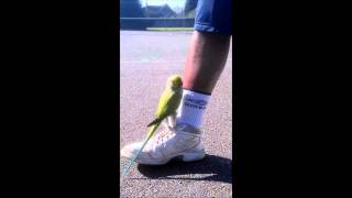 Parrot stopped play during tennis game