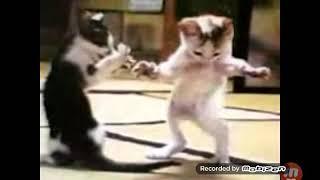 Komik Kedi Dansı 😀👉🐱(ERIK DALI)
