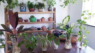 7 Plantas que Podem Ser Cultivadas em Água – Testei E deu Certo