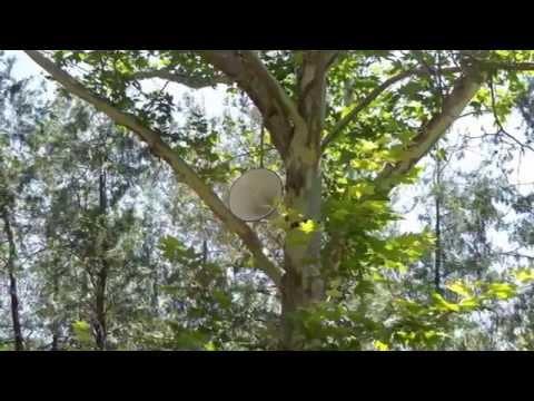 видео: Чимкентский дендропарк