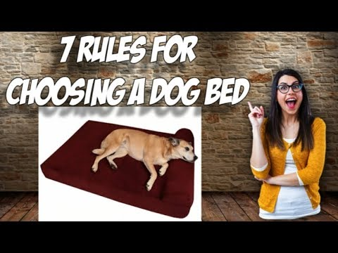 🐶-7-rules-for-choosing-a-dog-bed-🐶-dog-training-usa.net