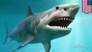 How did the monster shark Megalodon go extinct?- TomoNews