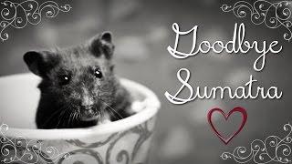 ~ Goodbye Sumatra ~ Thumbnail