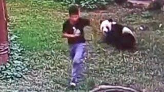 5 ШОКИРУЮЩИХ моментов в зоопарке, снятых на камеру