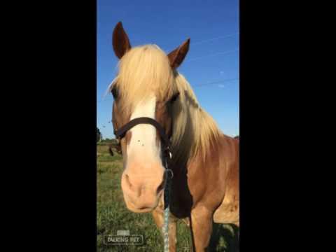 A HOOF KY talking horse who breaks down emotional barriers.