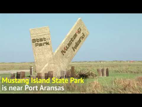 Hurricane Harvey State Parks Damage - Texas Parks & Wildlife [Official]