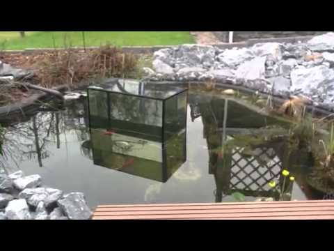 koi und goldfisch aussichtsturm im gartenteich bei christian youtube. Black Bedroom Furniture Sets. Home Design Ideas