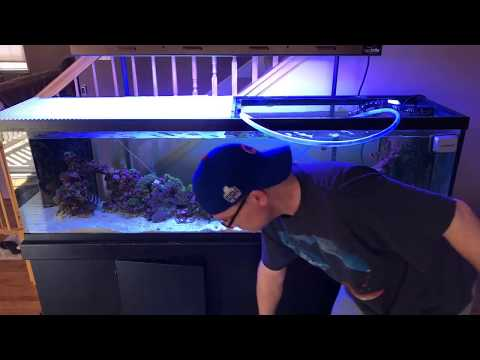 saltwater tank water change - water change for saltwater aquarium - rotter tube reef live stream