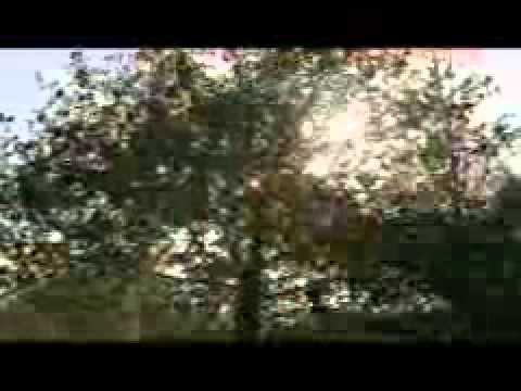 CEPSA, la compañía (vídeo corporativo)