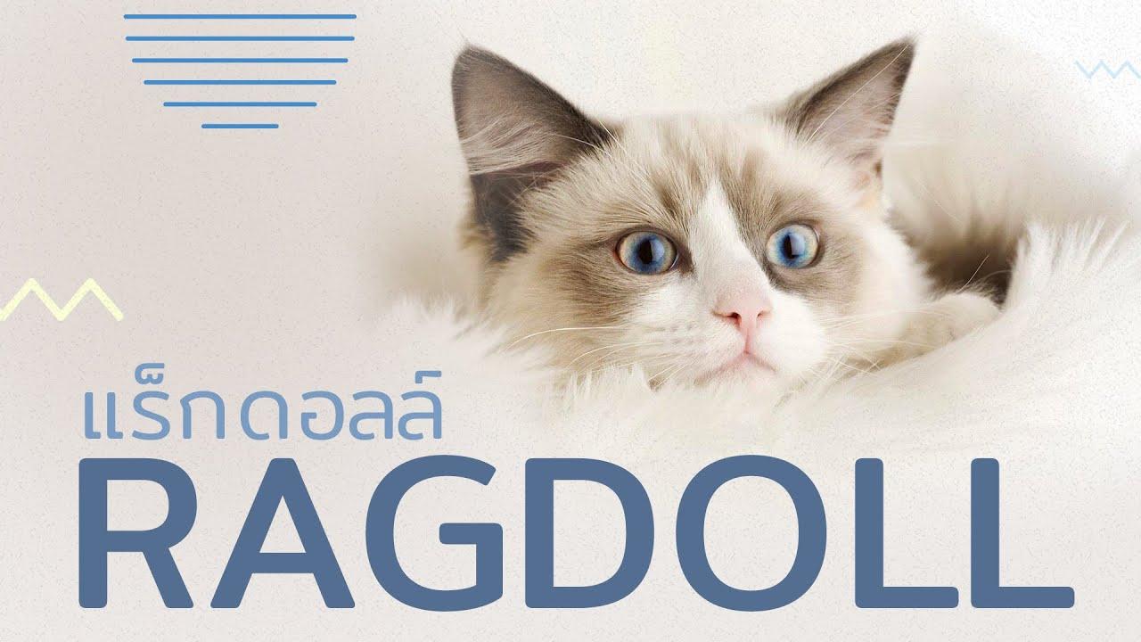 5 เรื่องรู้หรือไม่ ของแมวสุดน่ารัก \