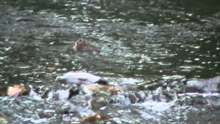 otters in de orthe op camping floreal laroche