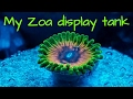 Zoanthids Coral Tank Here At Jbsmarines Loads Of Zoa Mushrooms And Hard Coral Frags mp3