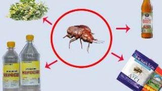 видео Тараканы в квартире методы борьбы и профилактики