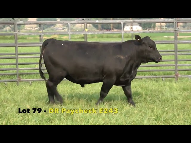 Black Gold Bull Sale Lot 79