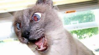 Приколы.Бешеная кошка