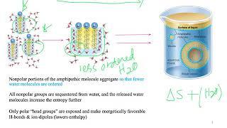 Hydrophobic Effect (Dr Terrell)