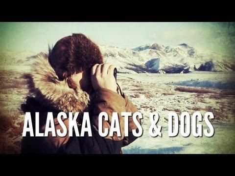 Alaska Predators | Trapping and Hunting in Alaska