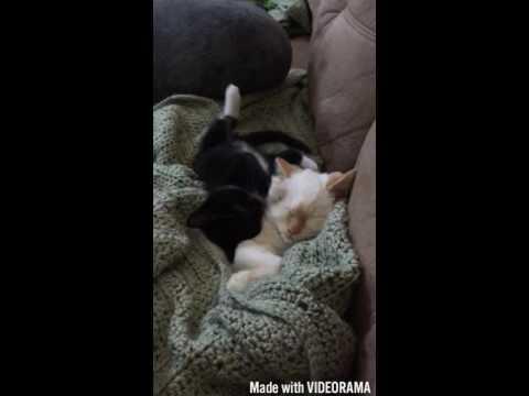 Cat Attack 2