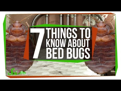 7 Things You Should Know About Bed Bugs