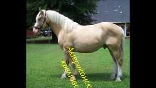 10 самых редких пород лошадей