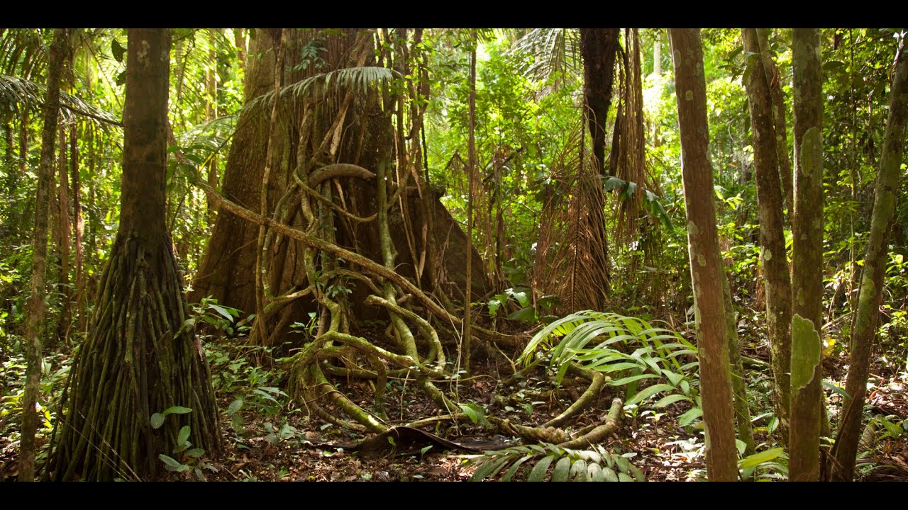 amazon rainforest - photo #7