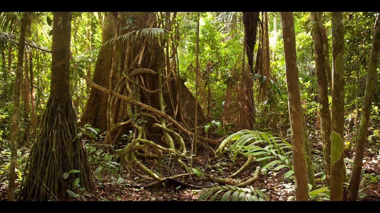 Amazon jungle documentary national geographic - YouTube
