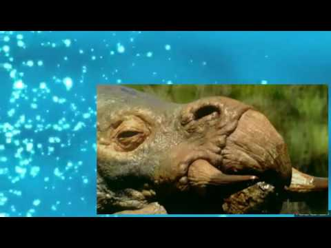 Walking With Dinosaurs s01 Ep01 New Blood