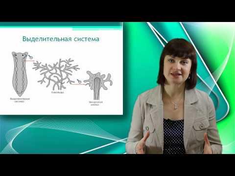 Белая планария. Онлайн подготовка к ЕГЭ по Биологии.