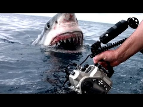 Craziest Great White Shark Encounter Caught On Film