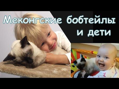 Коты и дети. Какая порода кошек для детей самая подходящая... конечно меконгский бобтейл