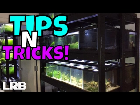 🔴Freshwater Aquarium Fish Room Breeding Keeping and More!