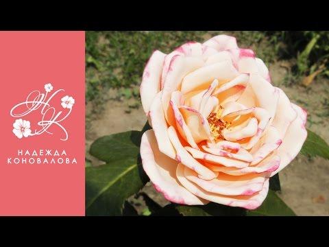 Садовая роза из фоамирана по шаблонам с настоящего цветка с тонировкой лепестков акриловыми красками