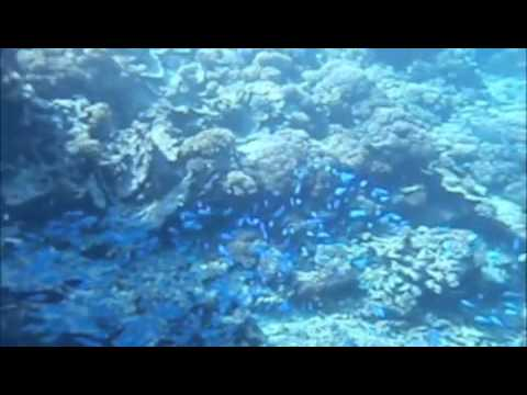 South Pacific Survival 3- Reef