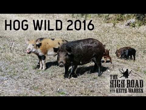 Airgun Hog Hunting | Hog Wild 2016 Part 1