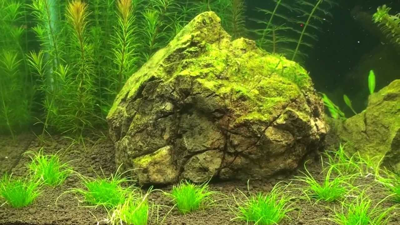 Aquascape 10Gallon ADA substrate hair grass Week 1 - YouTube