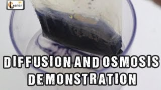 Diffusion and Osmosis | Iodine starch experiment with bag | Science Experiments | elearnin