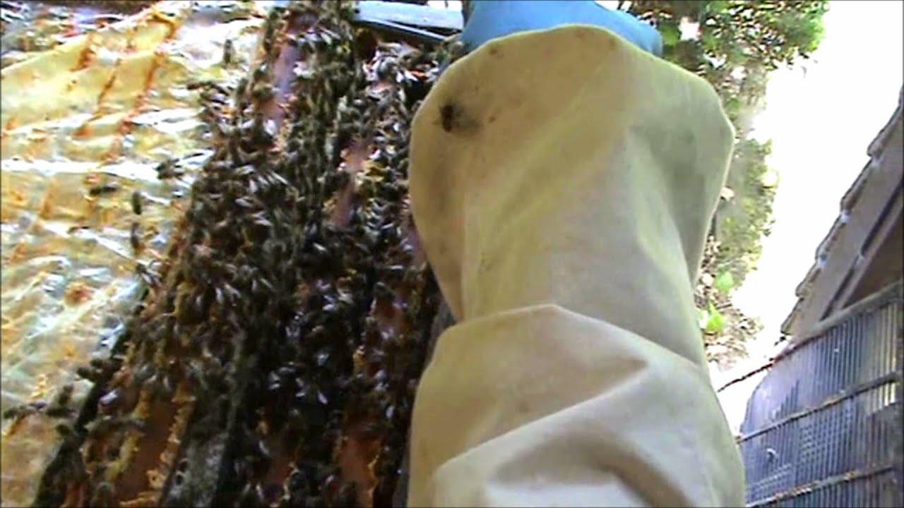 Imker Laat Bijen Raten En Honing Zien Voor Spreekbeurt