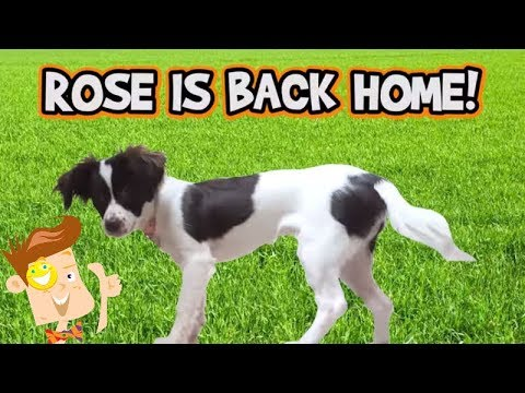 Thumbnail: Puppy Monkey Baby vs. Giant Worm! Dog Life Hacks! ROSE COMES HOME? (FUNnel Vision HEX BUGS Vlog)