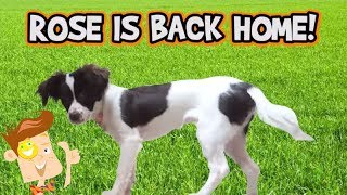 Puppy Monkey Baby vs. Giant Worm! Dog Life Hacks! ROSE COMES HOME? (FUNnel Vision HEX BUGS Vlog)