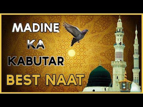 MADINE KA KABUTAR । BEST HEART TOUCHING NAAT । BY JANAB AHMAD SAGAR