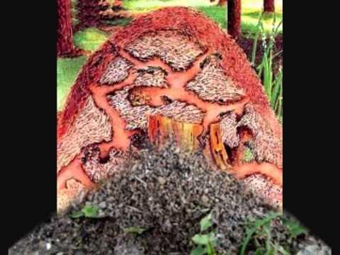 hormigas y hormigueros - YouTube