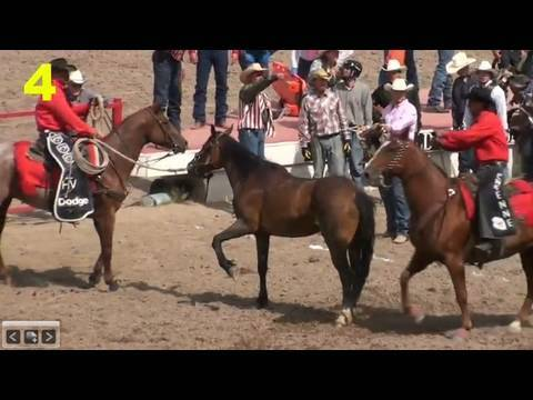 2009 Cheyenne Animal Injuries, Part 1