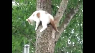 Кошка спасает котенка с дерева