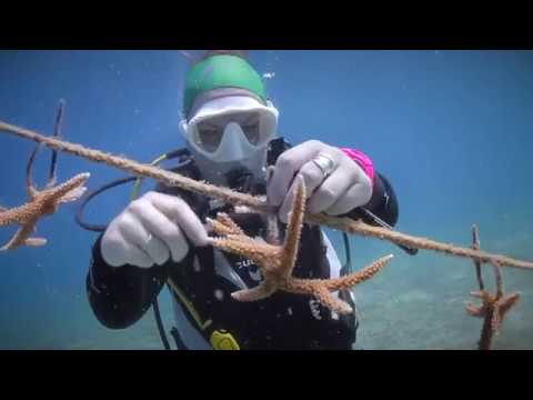 Stuarts Supports the Central Caribbean Marine Institute