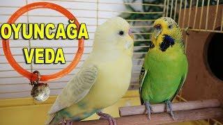 Muhabbet Kuşu Pastel Yeni Eşi - Oyuncağa Veda
