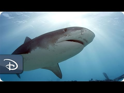 'Wishes for Wildlife' - Marine Life | Disney's Animals, Science & Environment