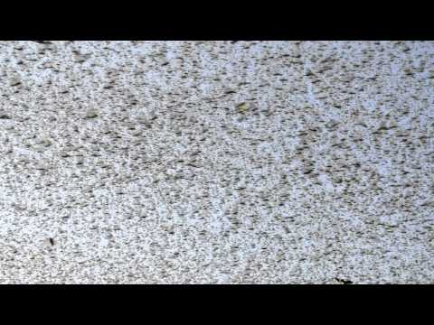 Нашествие саранчи\Locust Invasion