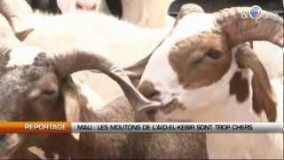 Mali: Les moutons de l'Aid El Kebir sont trop chers